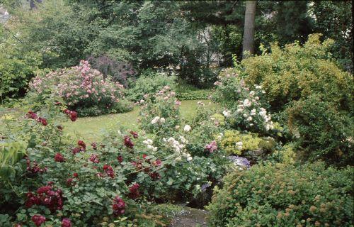 Hausgarten in neustadt bei coburg 1 referenzen for Rosa coburg